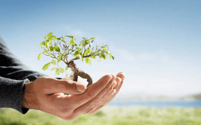 Environmentally Friendly Products And It's Benefits